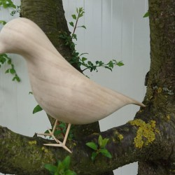 Kuş Taslağı Huş Ağacı R-3