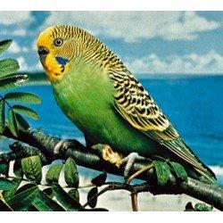 Muhabbet Kuşu Kafesleri